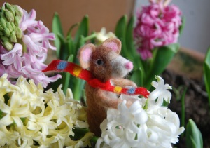 Pickle in the hyacinths